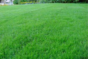Трава газонная (вес)