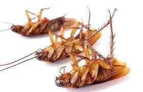 От тараканов, муравьев